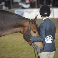 Cafe Noir by Cabardino - 2012 Lieutenant Governor's Champion - RAWF