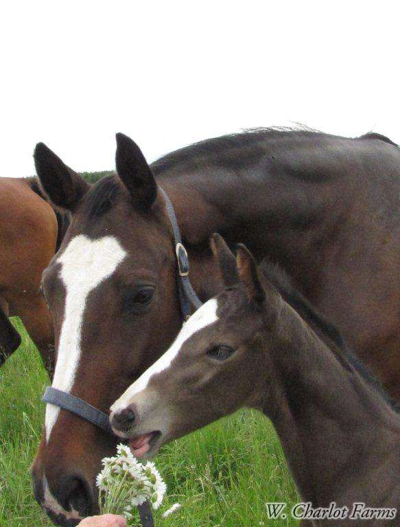 Retina and her Viva foal,  just a few days old