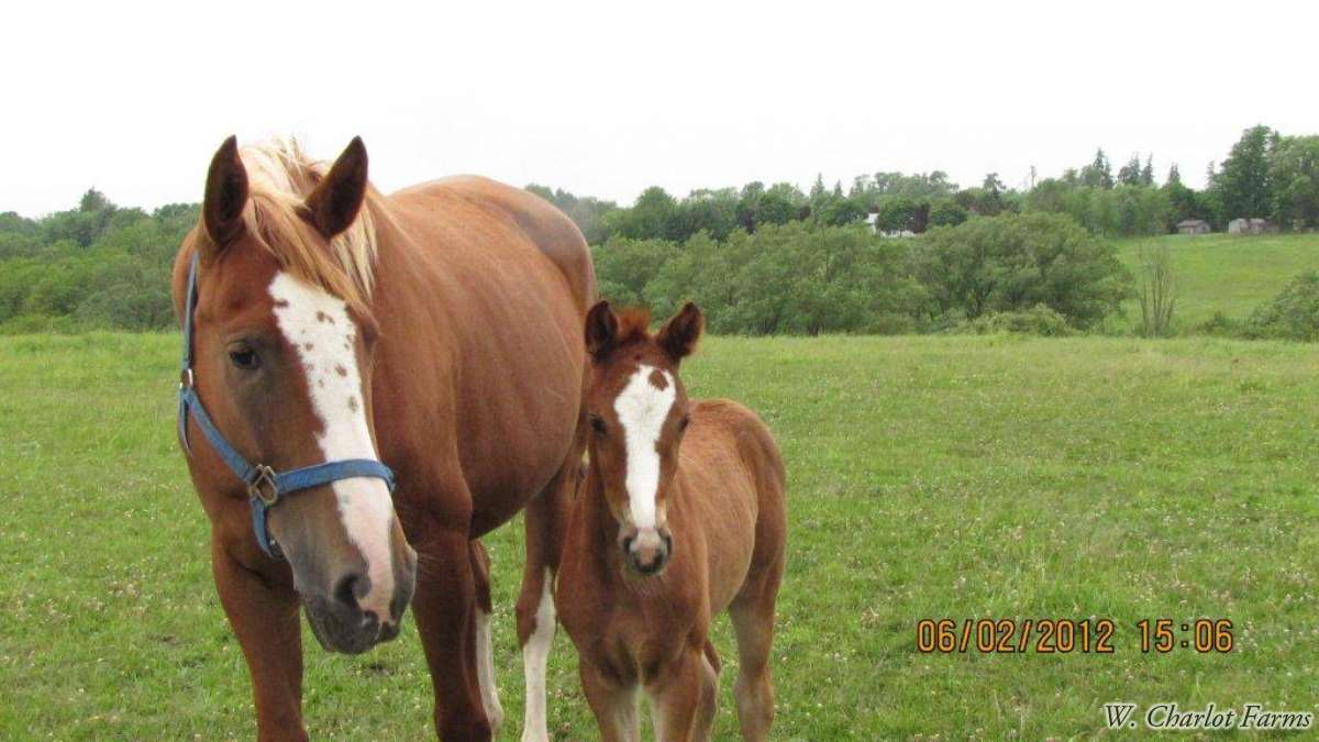 Rio's Florianna ( Rio's Filius)  and her filly by Viva Voltaire